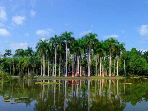2019年中國科學院西雙版納熱帶植物園土壤生態研究組招聘公告